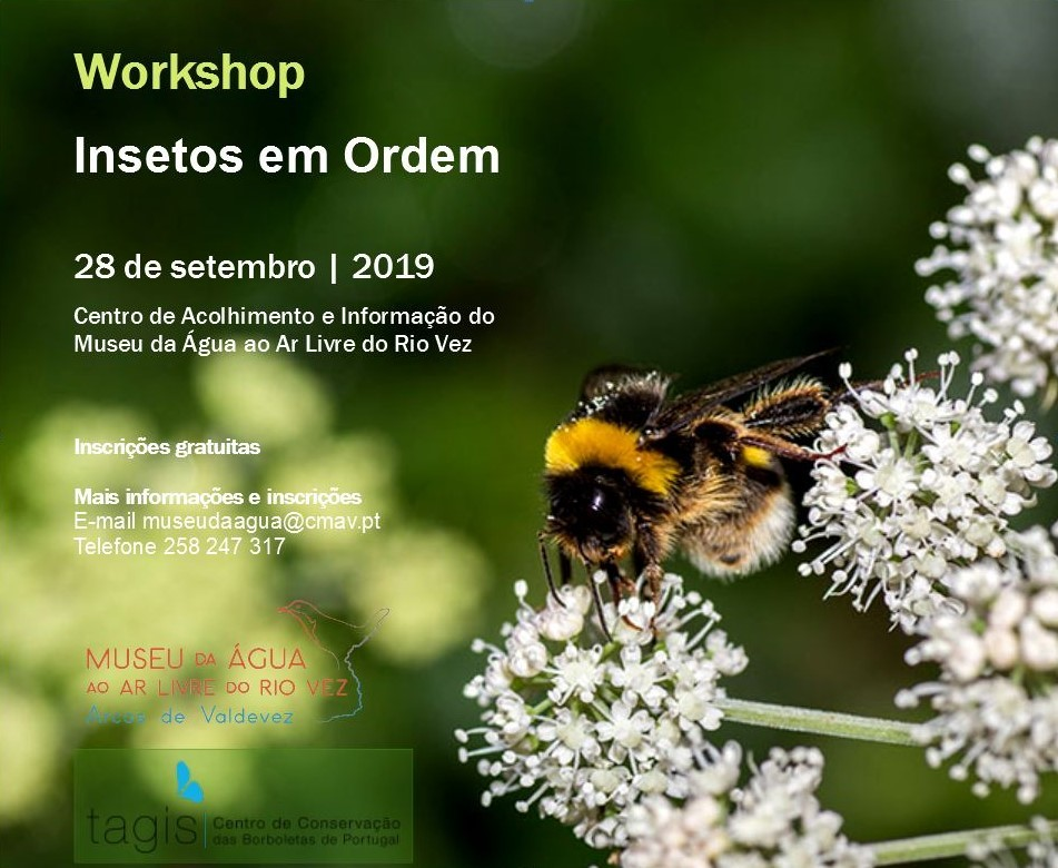 workshop_insetos3